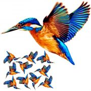 kingfisher craft film wings