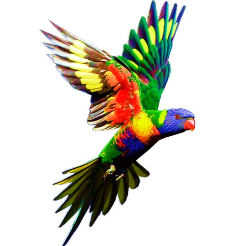 lorikeet craft film wings