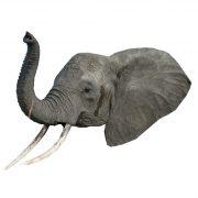 elephant 2craft film cutouts