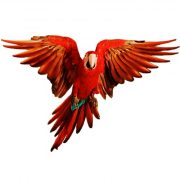 red macaw film cut outs gnc