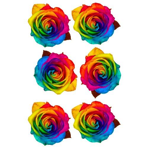 rainbow rose film designs