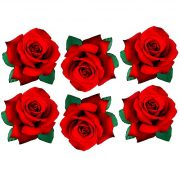 red rose film designs