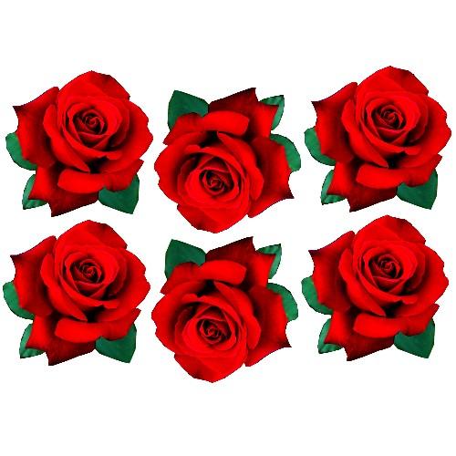 red rose film designs