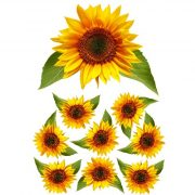 sunflower film designs
