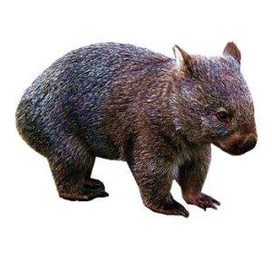 wombat craft film designs