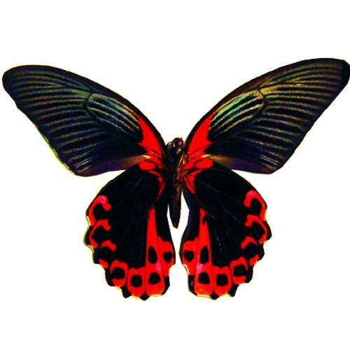 craft film designs butterfly #1
