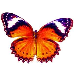 craft film designs butterfly #2
