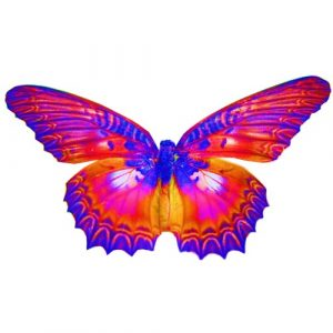 butterfly #3 craft film designs