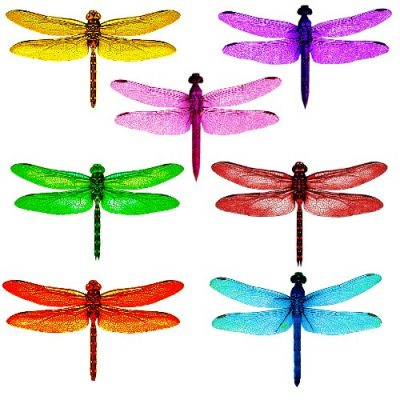 dragonfly #1 craft film designs