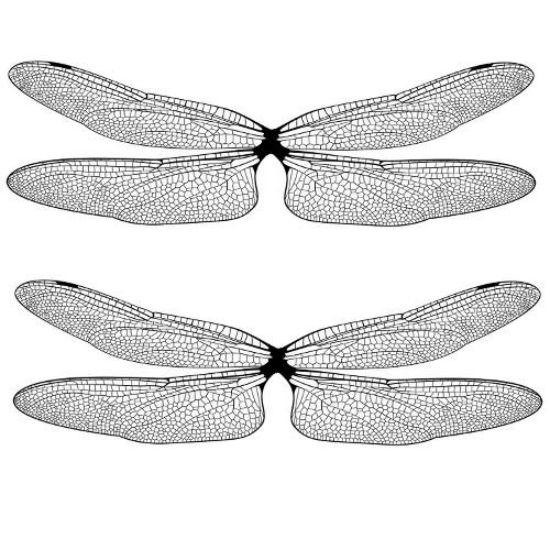 dragonfly film design bw