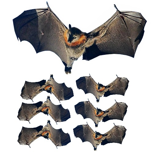flying fox bat film desgns