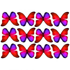 butterfly film designs c1d