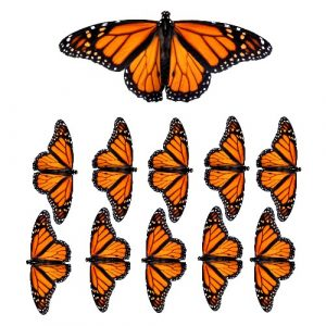 monarch butterfly film designs